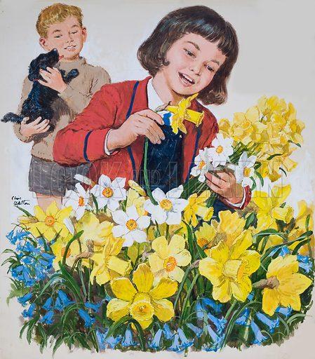 Schoolgirl arranging daffodils and bluebells