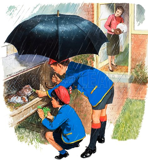 Schoolboy and Schoolgirl feeding their Guinea Pigs in the rain beneath their father's umbrella, their mother waiting at the door with tea.  Original artwork for cover of Treasure no 47.