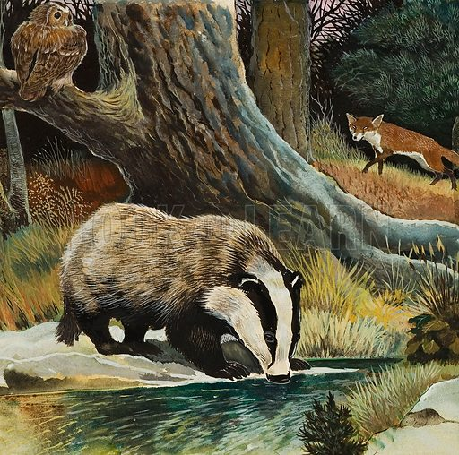 Badger, Fox, Owl and Mouse. Original artwork for Look and Learn (issue or book yet to be identified).