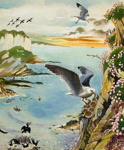 The Cove shows the varied bird life high above a sheltered bay at sunset.  Original artwork for illustration on pp12-13 of Treasure issue no23 (22 June 1963).