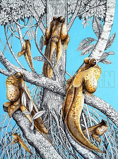 cimbing perch, picture, image, illustration