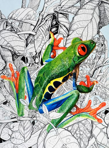 Nature's Kingdom: The Flying Frog. From Look and Learn no. 845 (25 March 1978). Original artwork.