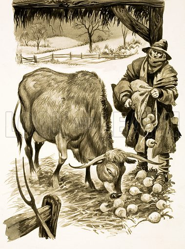 The Wonderful Story of Britain: When Farming Changed. Cattle are fed on the Summer crop of turnips in Winter. Original artwork from Treasure no. 145 (23 October 1965).