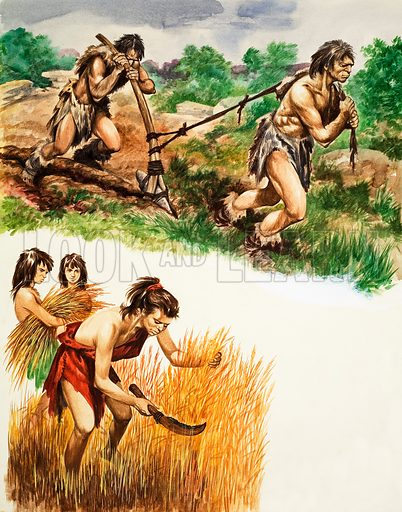 Stone Age farming: ploughing and harvesting. Original artwork from Treasure no. 211 (28 January 1967).