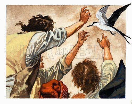 Mutiny on the Bounty. Hunting seabirds for food. Original artwork.