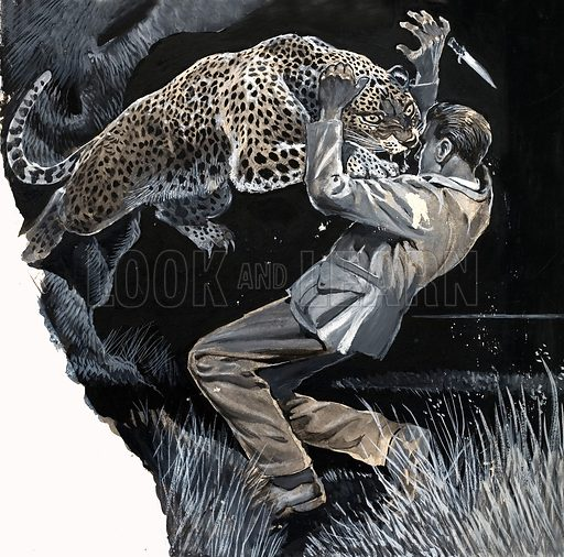 Unidentified man being attacked by a leopard. Original artwork (dated 30/5/69).