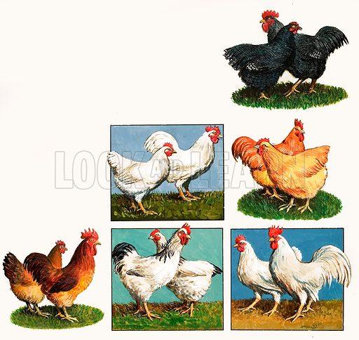 Hens. Original artwork from Treasure (?).
