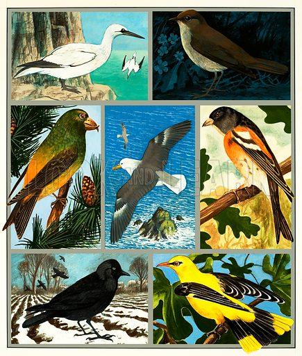Unidentified bird montage. Original artwork.