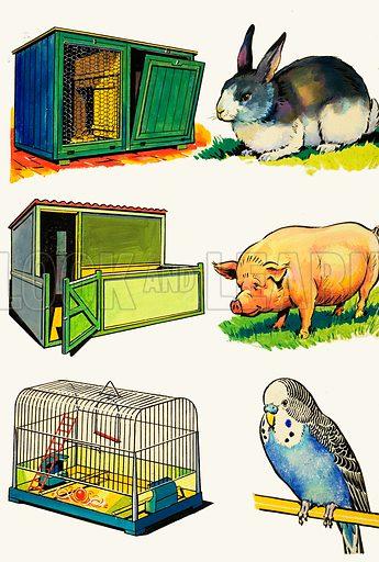 Pets and Their Homes. Original artwork.