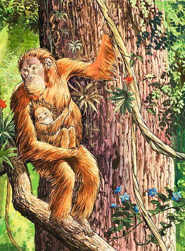 Nature Wonderland: Man of the Woods. Original artwork from Treasure no. 372 (28 February 1970).