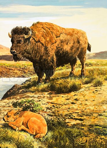Nature Wonderland: The Return of the Buffalo. Original artwork from Treasure no. 385 (30 May 1970).