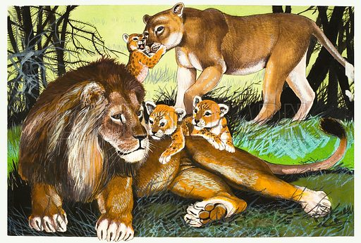 Lion, lioness and cubs. Original artwork.