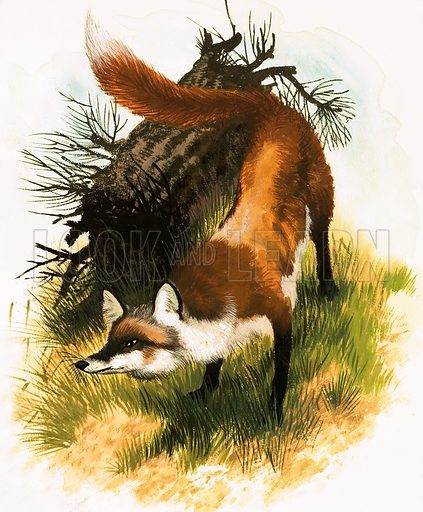 Fox. Original artwork.