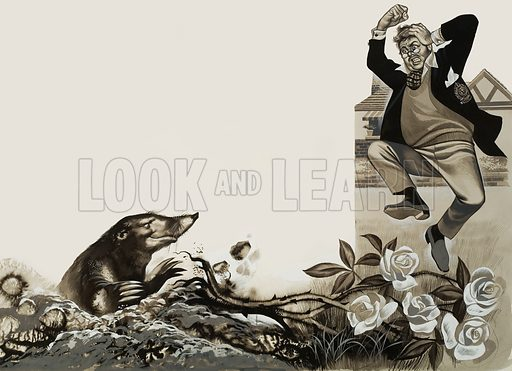 Mole in the the Garden. Original artwork for illustration in Look and Learn (issue yet to be identified).