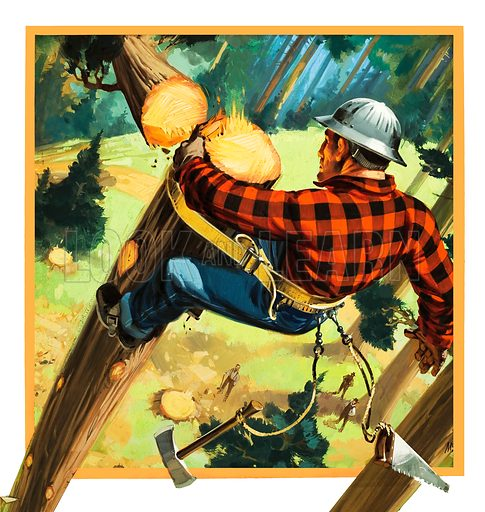 Lumberjack at work high up in a tree. Original artwork for cover of Look and Learn issue no 982 (3 January 1981).