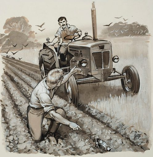 Farmer Discovering an Antiquarian Relic.  Original artwork for illustration on p13 of Look and Learn issue no 1007 (27 June 1981).  Lent for scanning by The Gallery of Illustration.