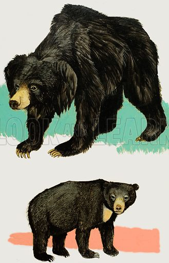 Bears.  Original artwork for Treasure (issue yet to be identified).  Lent for scanning by The Gallery of Illustration.