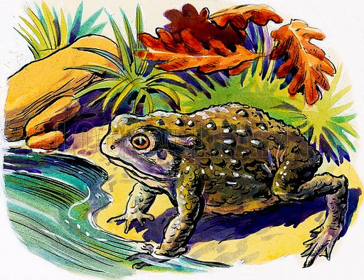 Frog.  Original artwork for Treasure (issue yet to be identified).  Lent for scanning by The Gallery of Illustration.