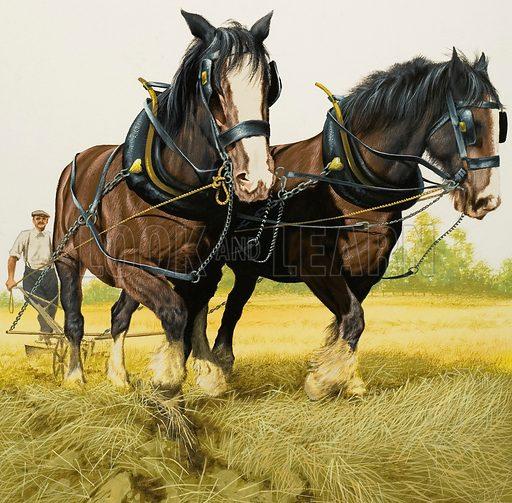 Farm horses, picture, image, illustration