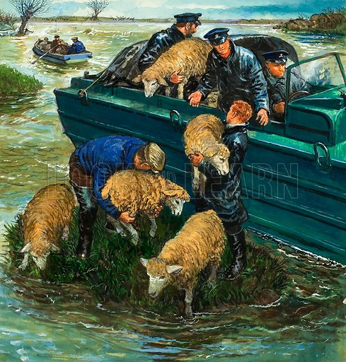 Rescuing Sheep from a Flooded Field, an example of the work of the RSPCA Original artwork for illustration on p11 of Look and Learn issue no 717 (11 October 1975).
