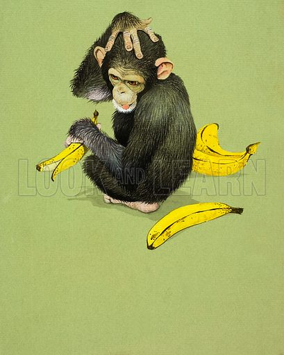 Monkey with Bananas.  Original artwork for Look and Learn or Treasure (issue yet to be identified).  Lent for scanning by The Gallery of Illustration.