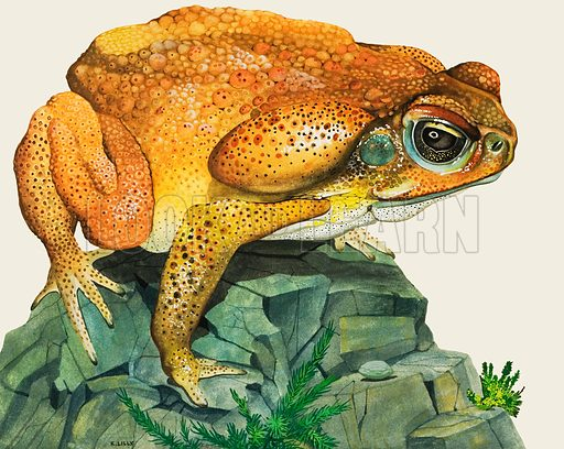 The Giant Toad.  Original artwork for cover of Treasure issue no 227.  Lent for scanning by The Gallery of Illustration.