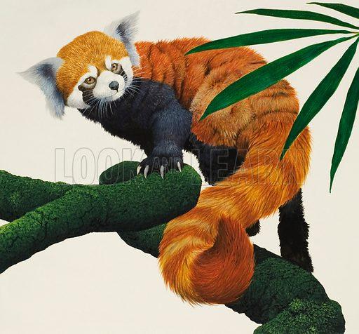 Red Panda. Original arwork for Treasure (possibly issue of 27 June 1970).