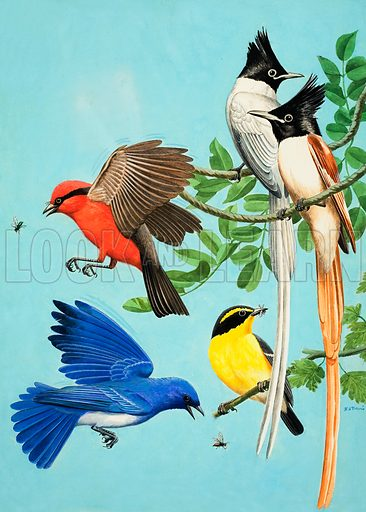 Brightly Coloured Birds.  Original artwork for Treasure (issue yet to be identified).  Lent for scanning by The Gallery of Illustration.