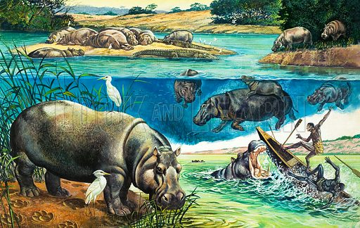Hippopotami. Original artwork for illustration in World of Wonder annual (edition yet to be identified).
