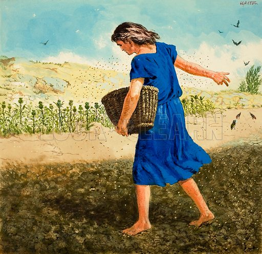 sower, picture, image, illustration