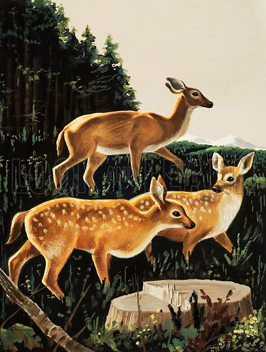 Deer in a Forest Clearing.  Original artwork for Look and Learn or Treasure,  Lent for scanning by The Gallery of Illustration.