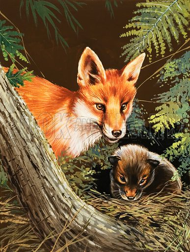 Fox and fox cub. Original artwork for Look and Learn or Treasure (issue yet to be identified).