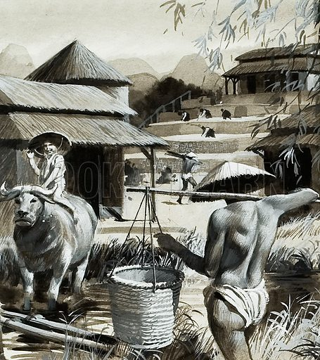 For centuries farming has been the chief occupation of the people of China, with rice the principal crop. Original atwork for illustration on p6 of L&L no.962 (16 August 1980).