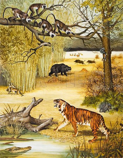 Animals of India. Original artwork for the illustration on p 12 of Treasure no. 125.