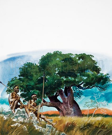 Talking about Trees. The primitive peoples treat the baobab with a great deal of reverence, for it provides them with the basic necessities of life. Original artwork for the illustration on p30 of L&L issue no. 964 (30 August 1980).