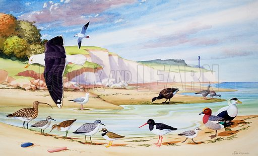 Sea Birds. Original artwork for illustration on pp14–15 of Once Upon a Time issue no 173.