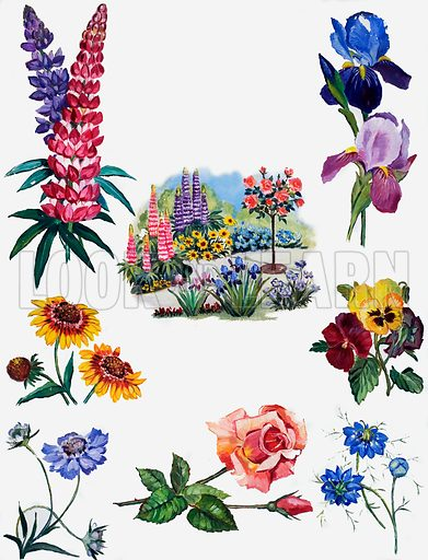 Seven lovely flowers showing vignettes of garden flowers around a border.  Original artwork for illustration on p5 of Treasure issue no 21.  Lent for scanning by the Illustration Art Gallery.