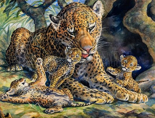 Leopard with its young.  Original artwork for Teddy Bear.  Lent for scanning by the Illustation Art Gallery.
