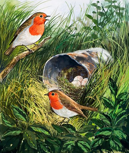 Robins.  Original artwork for illustration on p7 of Once Upon a Time issue no 13.  Lent for scanning by the Illustration Art Gallery.