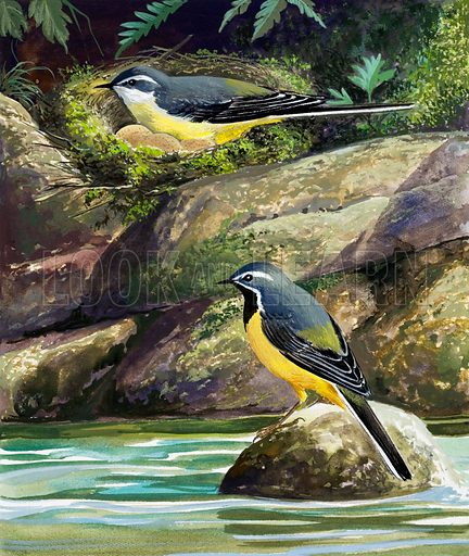 Wagtails.  Original artwork for illustration on p7 of Once Upon a Time issue no 13.  Lent for scanning by the Illustration Art Gallery.