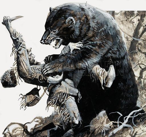 American frontiersman and fur trapper Hugh Glass being savaged by a bear, 1823. Glass' ordeal inspired the films Man in the Wilderness (1971) and The Revenant (2015). Original artwork for illustration on p14 of Look and Learn issue no 877 (4 November 1978).
