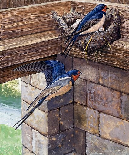Swallows. Original artwork for Once Upon a Time isssue no 13.