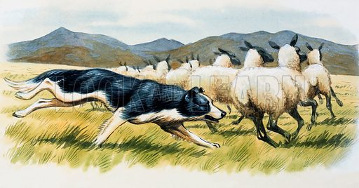 Sheepdog.  Original artwork for Look and Learn annual.  Lent for scanning by the Illustration Art Gallery.