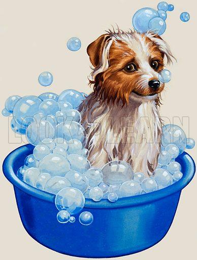Dog being washed.  Original artwork.  Lent for scanning by the Illustration Art Gallery.