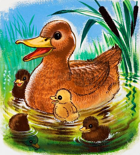 Ducks.  Original artwork.  Lent for scanning by the Illustration Art Gallery.