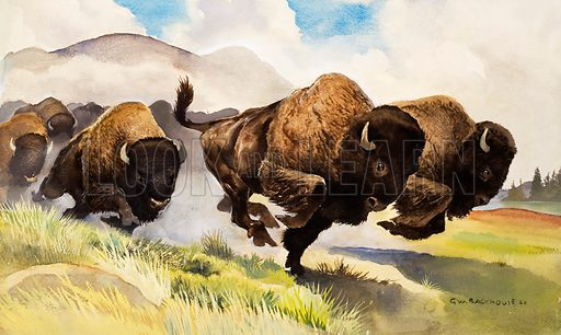 These buffalo are bison. Original artwork for illustration on p10 of L&L no. 42 (3 November 1962).