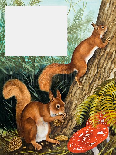 If You're Looking for a Squirrel... From Look and Learn no. 949 (29 March 1980). Original artwork loaned to Look and Learn for scanning by the Illustration Art Gallery.