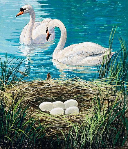 Swans Nest. Original artwork for illustration on p4 of Once Upon a Time issue no 23.  Lent for scanning by the Illustration Art Gallery.