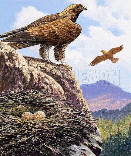Golden Eagles Nest.  Original artwork for Once Upon a Time.  Lent for scanning by the Illustration Art Gallery.