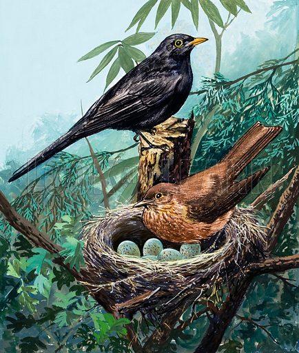 Birds and nest. Original artwork for Once Upon a Time.